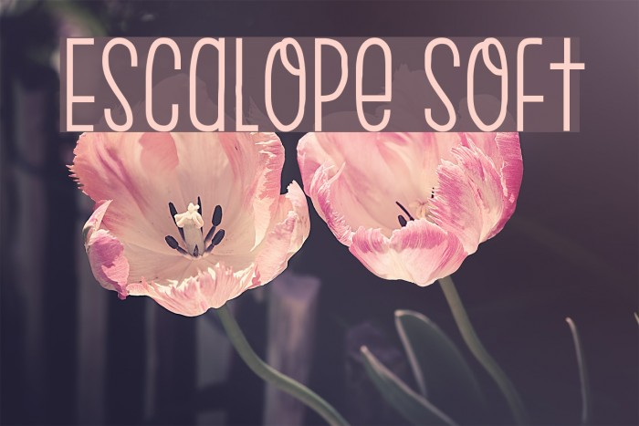 Escalope Soft Шрифта examples