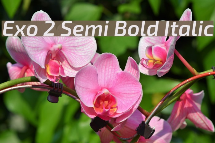 Exo 2 Semi Bold Italic Font examples