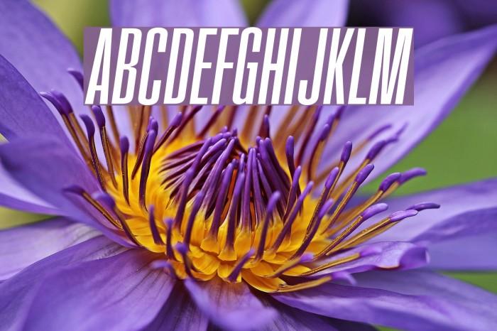 FatCow Italic Font examples