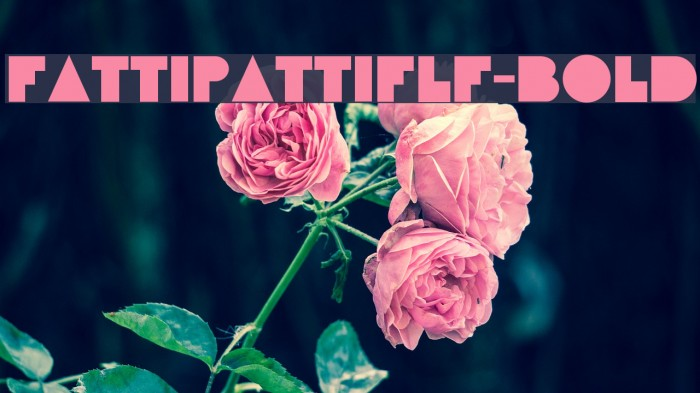 FattiPattiFLF-Bold Fonte examples