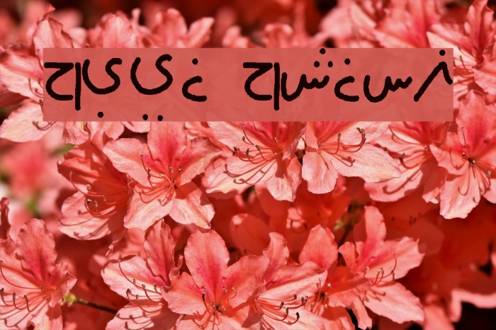 farsi family Font examples