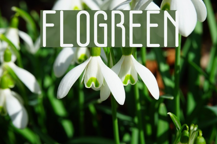 FLOGREEN Шрифта examples