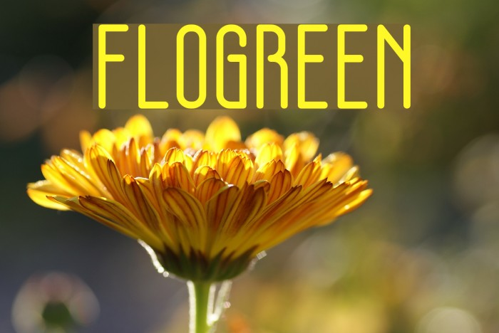 FLOGREEN Fonte examples