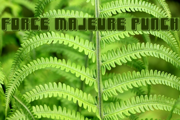 Force Majeure Punch Font examples