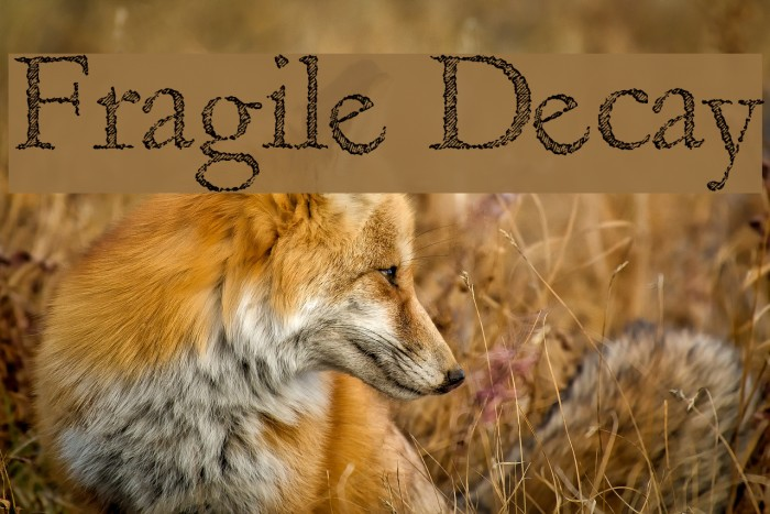 Fragile Decay Fonte examples