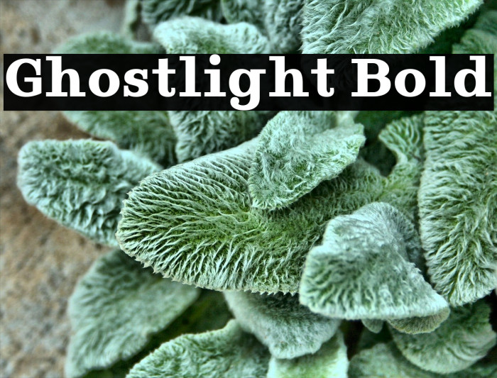 Ghostlight Bold Polices examples