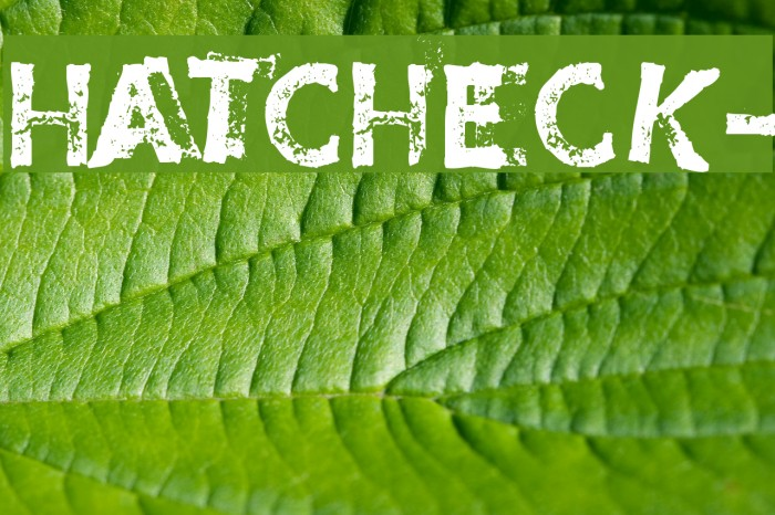 HatCheck- Font examples
