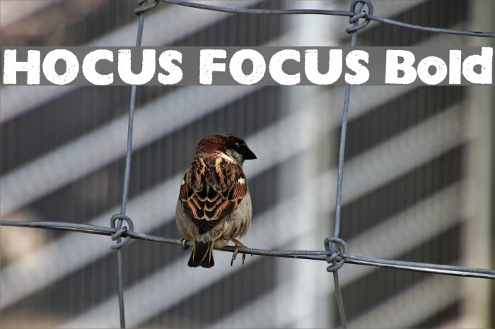 HOCUS FOCUS Bold フォント examples