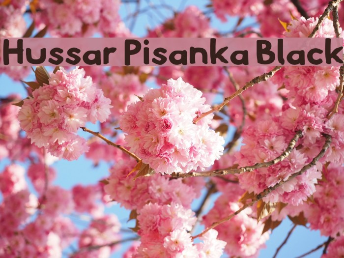 Hussar Pisanka Black Fonte examples