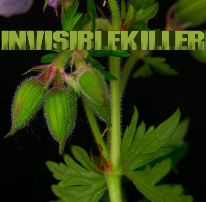 InvisibleKiller Fonte examples