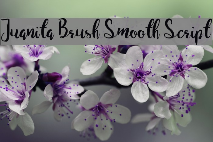 Juanita Brush Smooth Script Fuentes examples