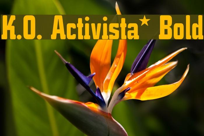 K.O. Activista* Bold Font examples