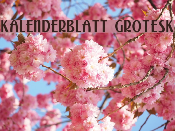 Kalenderblatt Grotesk Font examples