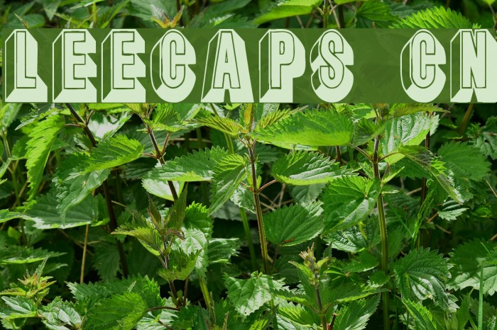 LeeCaps Cn Fonte examples