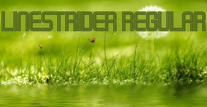 Linestrider Regular フォント examples