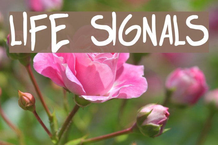 life signals 字体 examples