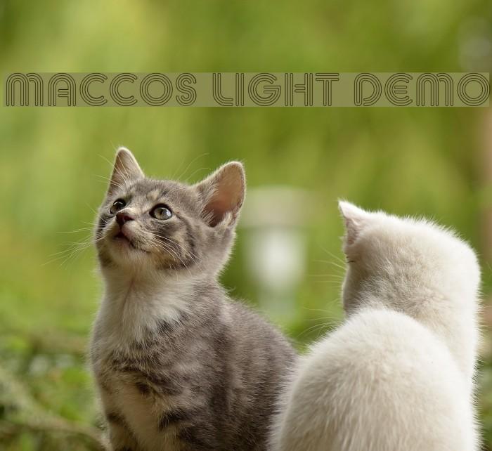 MACCOS LIGHT Demo Шрифта examples