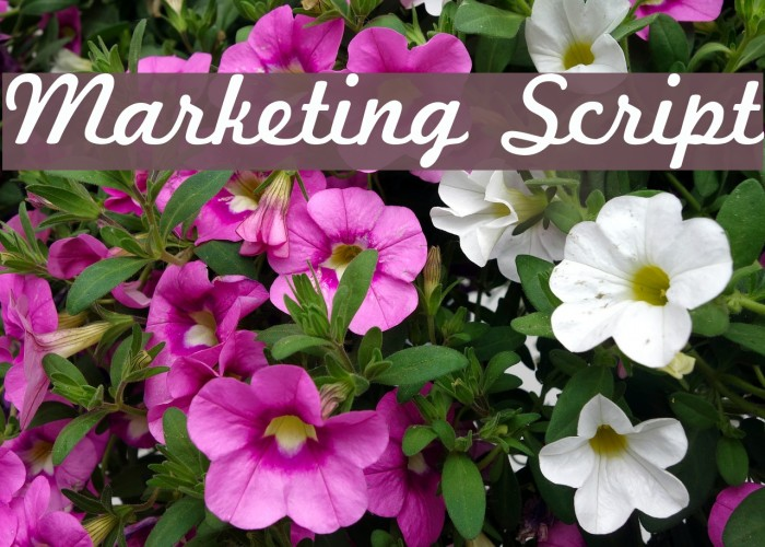 Marketing Script Fuentes examples
