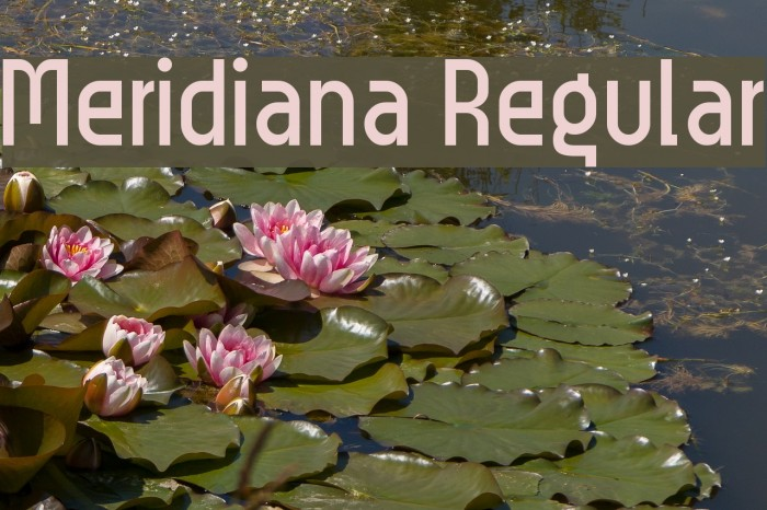 Meridiana Regular Font examples