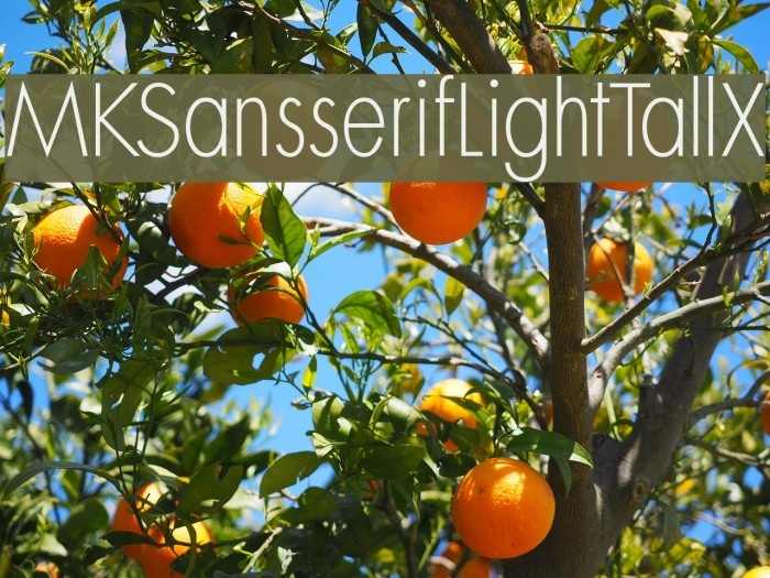 MKSansserifLightTallX Font examples