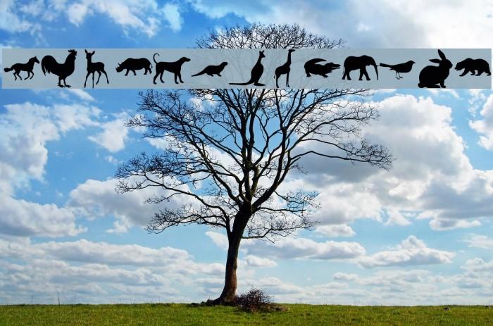 Nature Pro el harrak © photoara.blogspot.com : darrati10@gmail.com Fuentes examples
