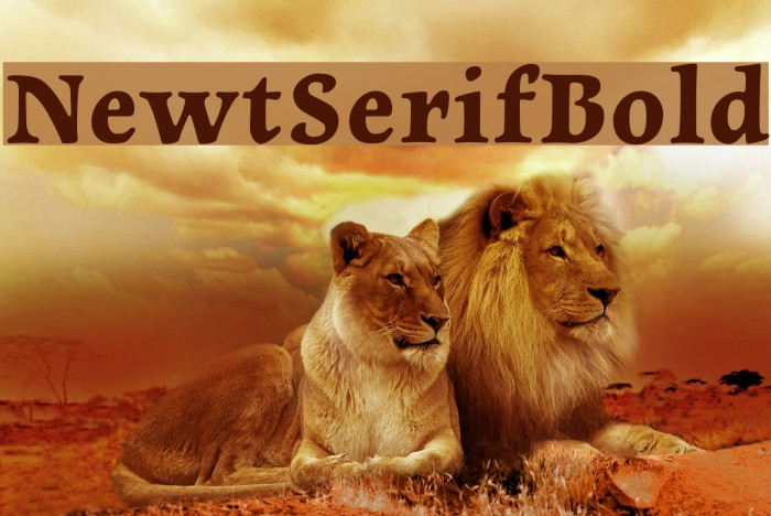 NewtSerifBold Fonte examples