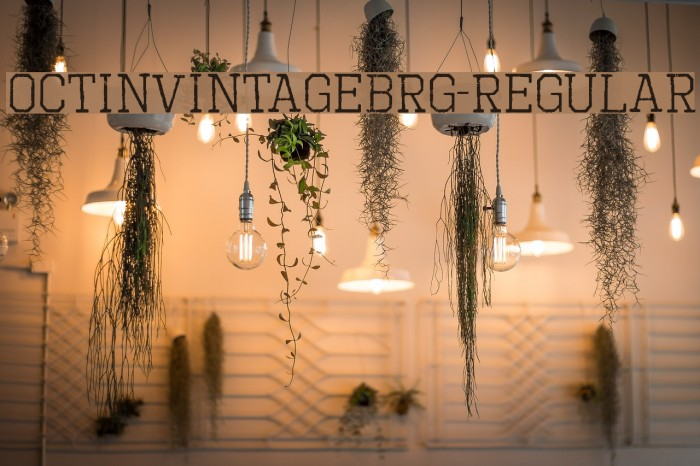 OctinVintageBRg-Regular Fonte examples