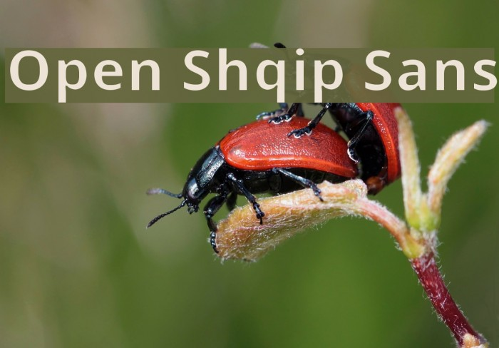 Open Shqip Sans Шрифта examples