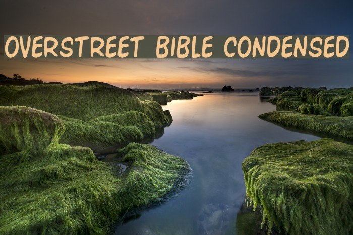 Overstreet Bible Condensed Polices examples
