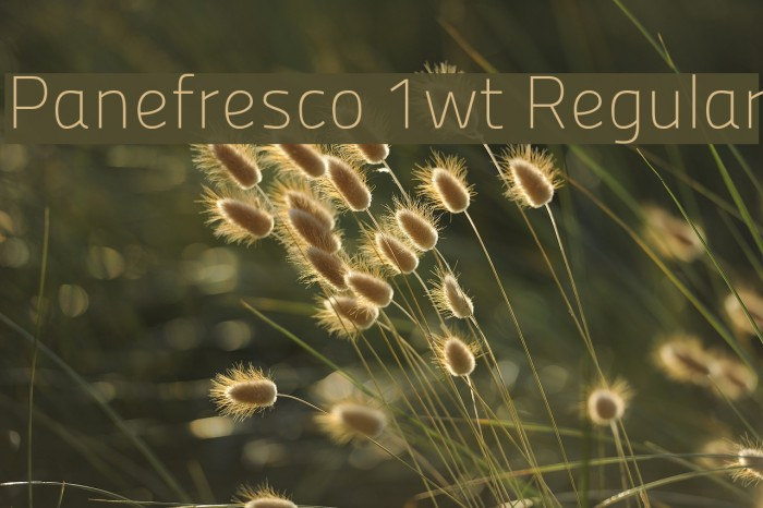 Panefresco 1wt Regular フォント examples