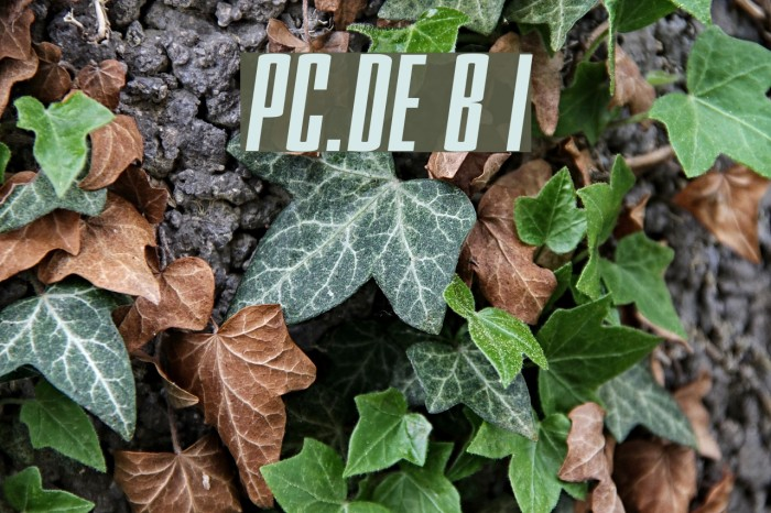 PC.DE Bold Italic फ़ॉन्ट examples
