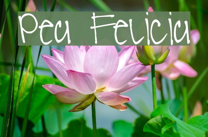 Pea Felicia Font examples