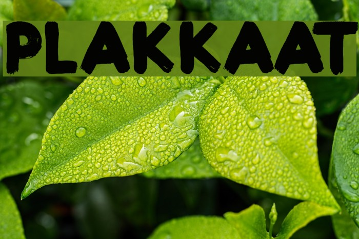 Plakkaat Font examples