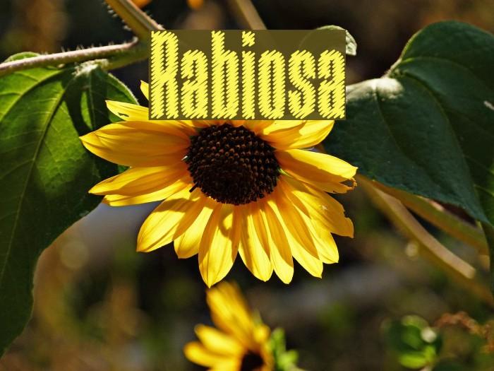 Rabiosa फ़ॉन्ट examples