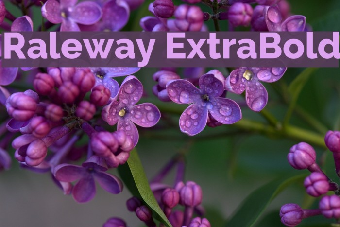 Raleway ExtraBold Font examples