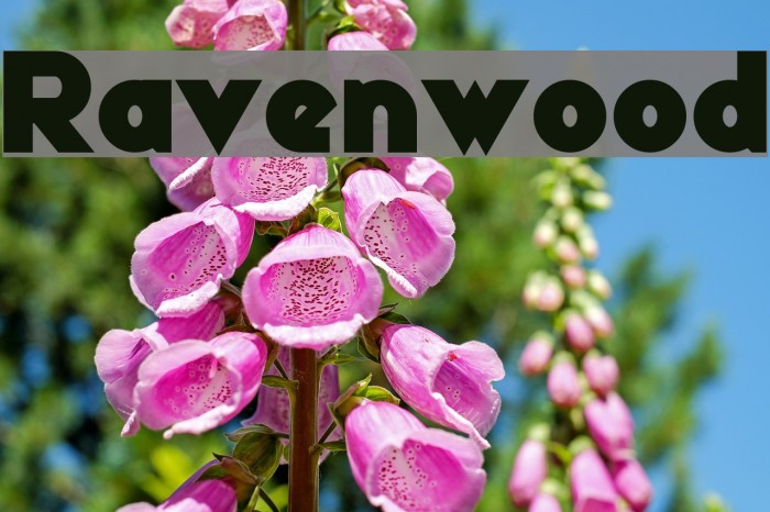 Ravenwood Font examples