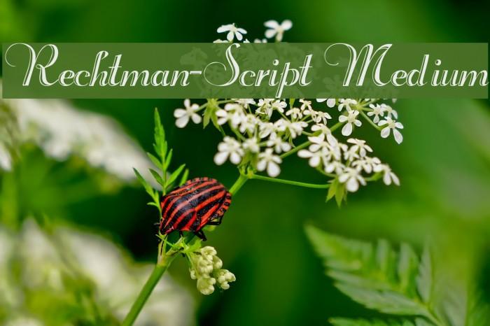 Rechtman-Script Medium フォント examples