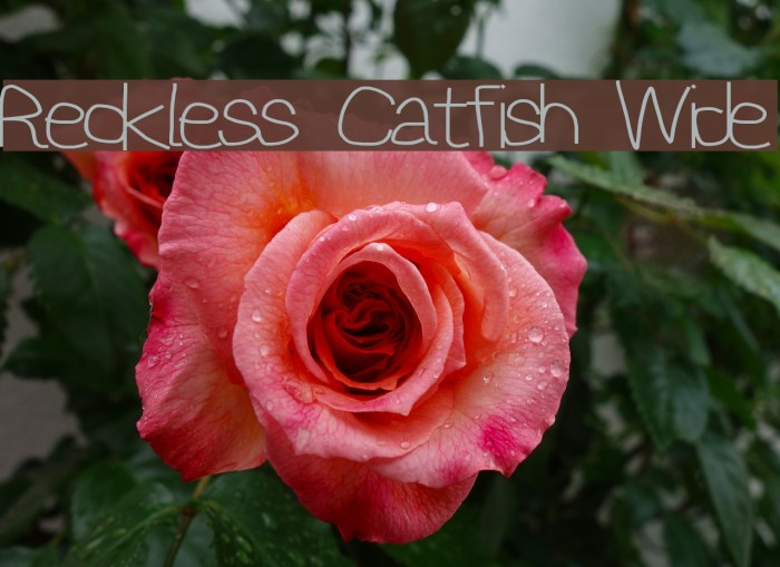Reckless Catfish Wide Шрифта examples