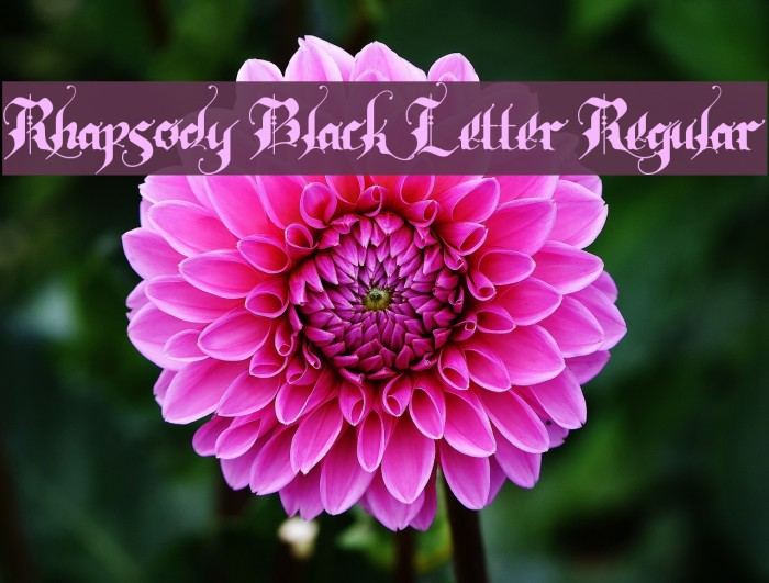 Rhapsody Black Letter Regular 字体 examples