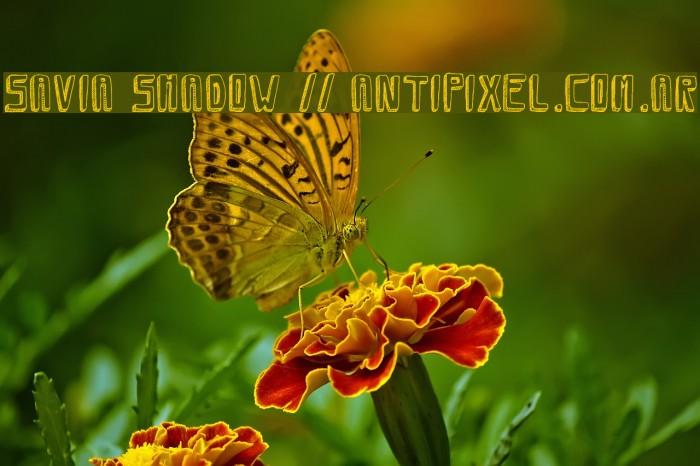 Savia Shadow // ANTIPIXEL.COM.AR Font examples