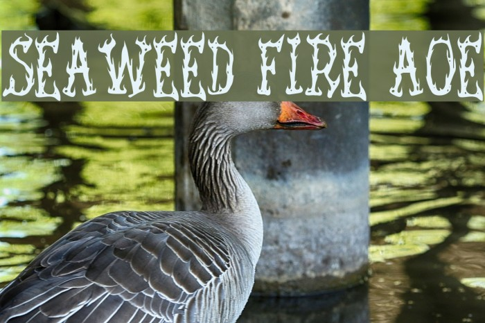 Seaweed Fire AOE Font examples