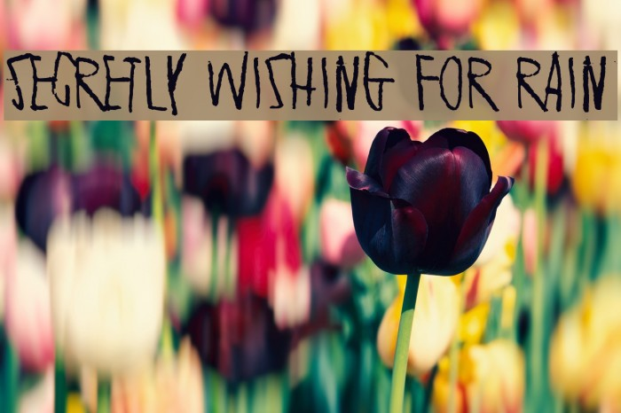 Secretly wishing for rain Font examples