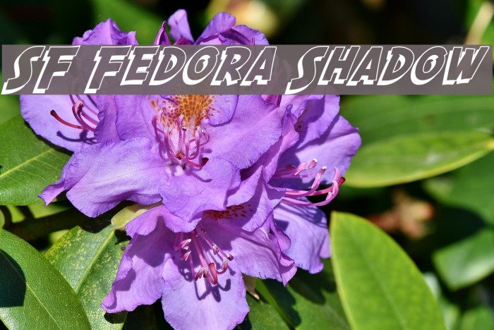 SF Fedora Shadow フォント examples