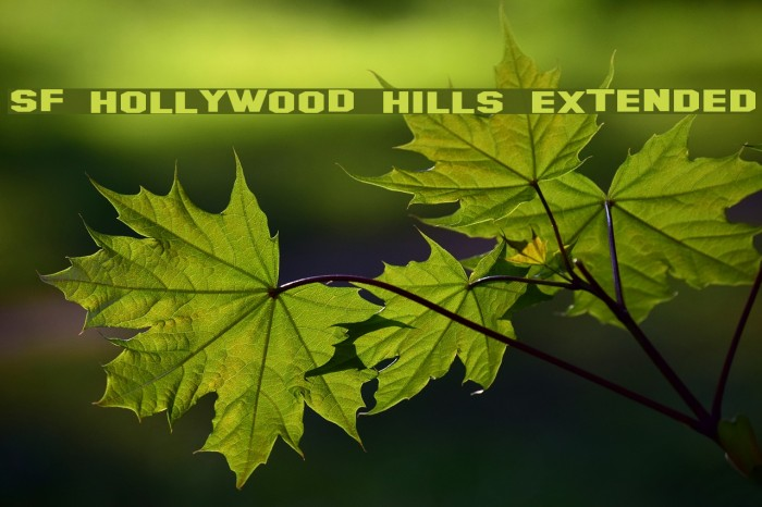 SF Hollywood Hills Extended Fonte examples