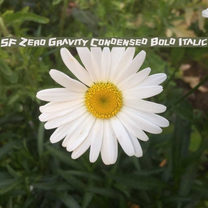 SF Zero Gravity Condensed Bold Italic Font examples