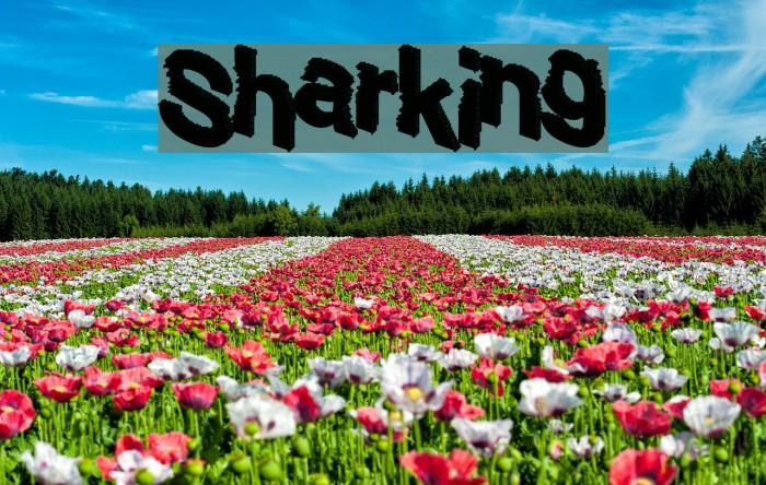 Sharking Шрифта examples