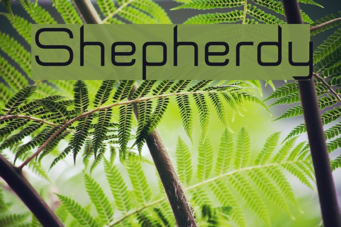 Shepherdy Schriftart examples
