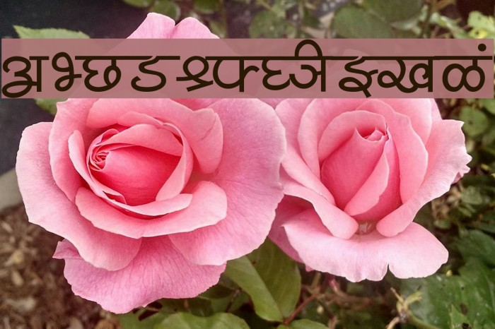 Shusha05 Font examples