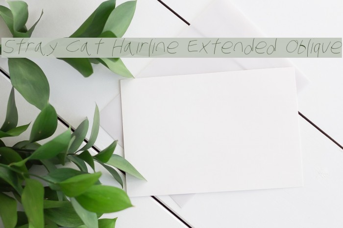Stray Cat Hairline Extended Oblique Fonte examples