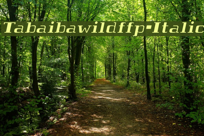 Tabaibawildffp-Italic फ़ॉन्ट examples